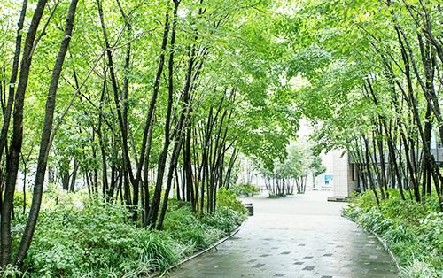豊かな緑に囲まれた環境